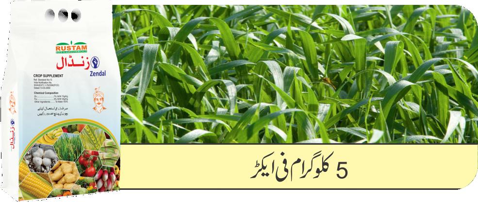 Wheat Zenda