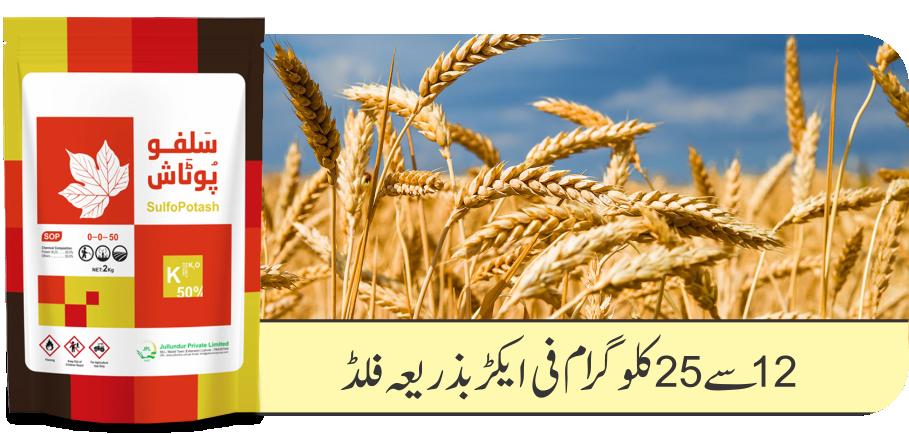 Wheat SulfoPotash